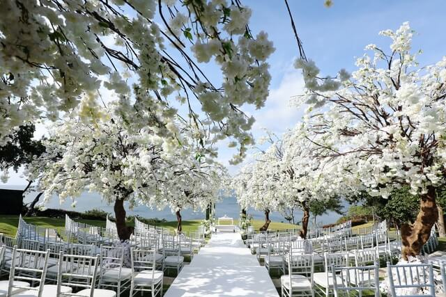 White chairs either side of white wedding aisle overshadowed by white blossom trees